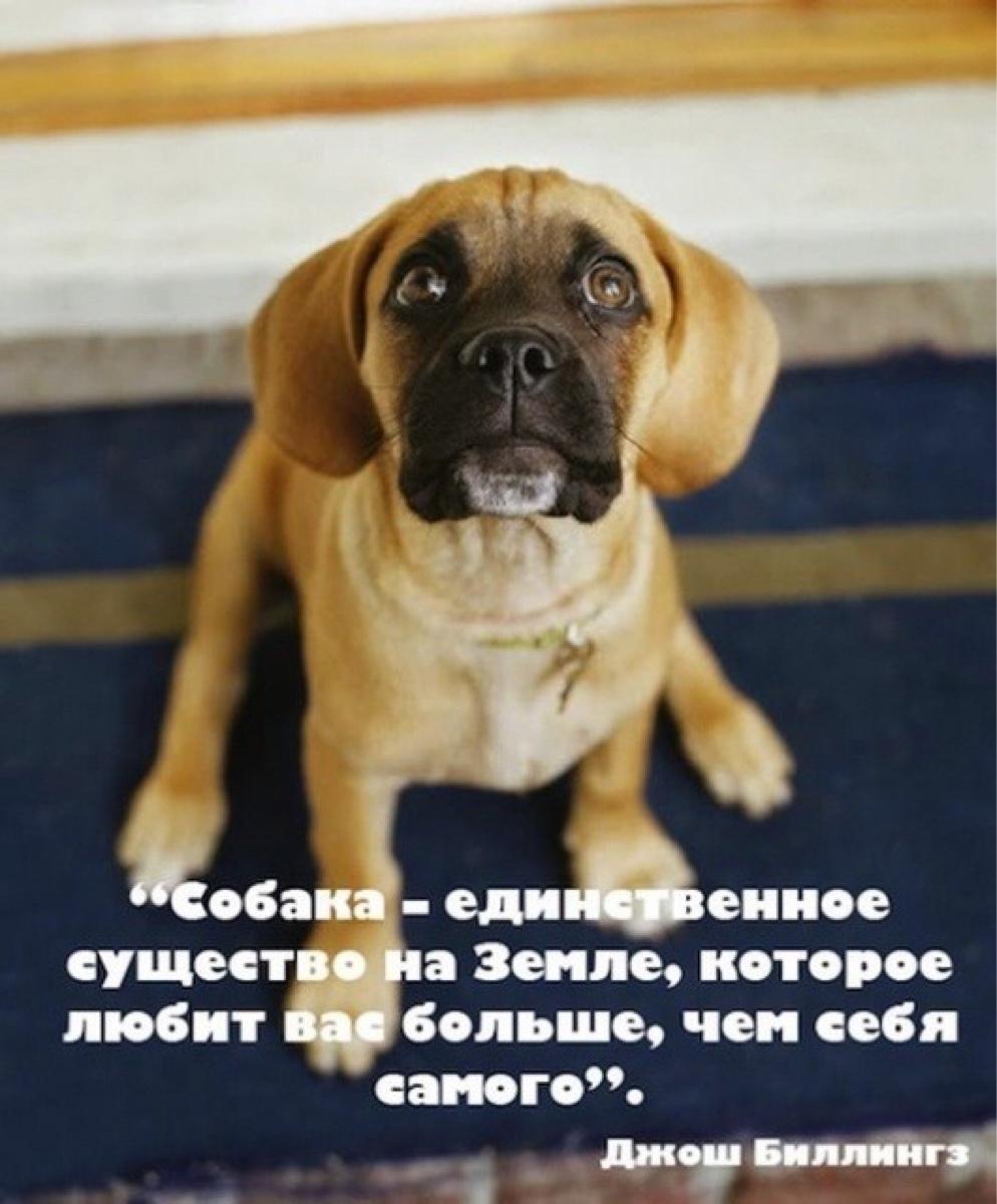 купить картинки цитаты про собак ассортименте