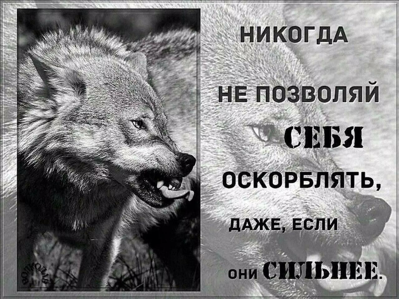 Волки картинки цитаты