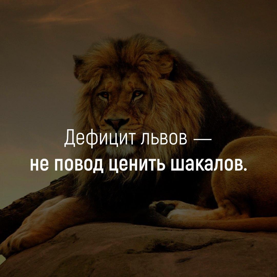 Статусы о львах с картинками