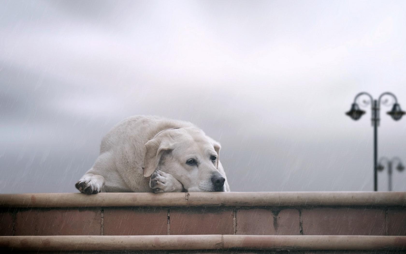 картинки про собаки со смыслом человек переживает то