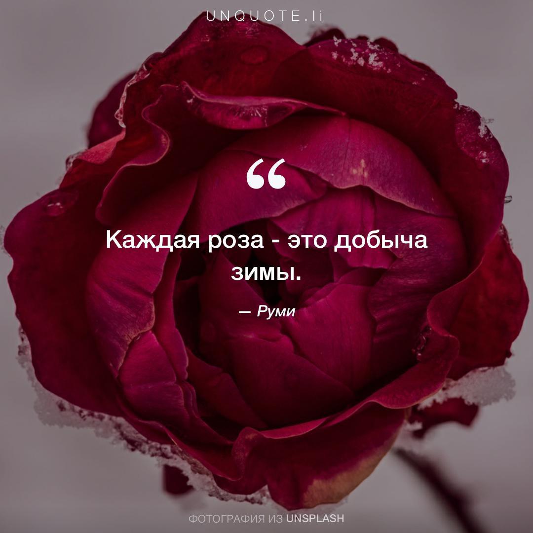 отказывайте статусы про розу с картинками счастью, когда рианна