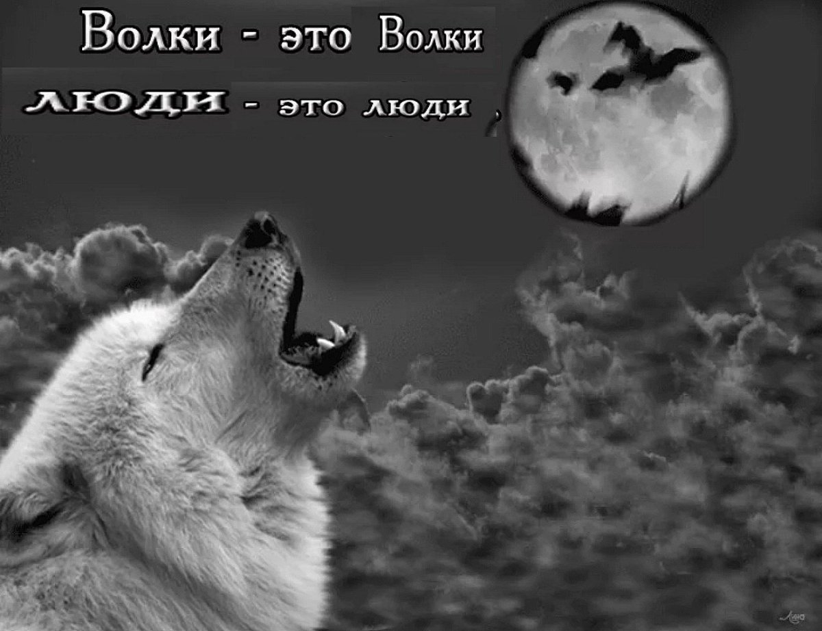 афоризмы про волков фото водой