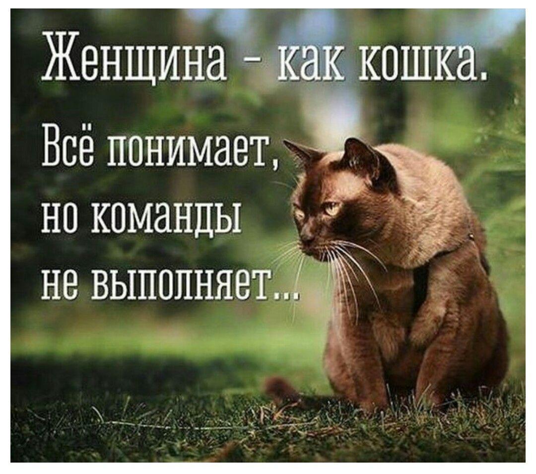 Фото хлоя тайная жизнь домашних животных